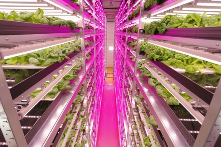 LED lighting advances in horticultural applications, boosts productivity