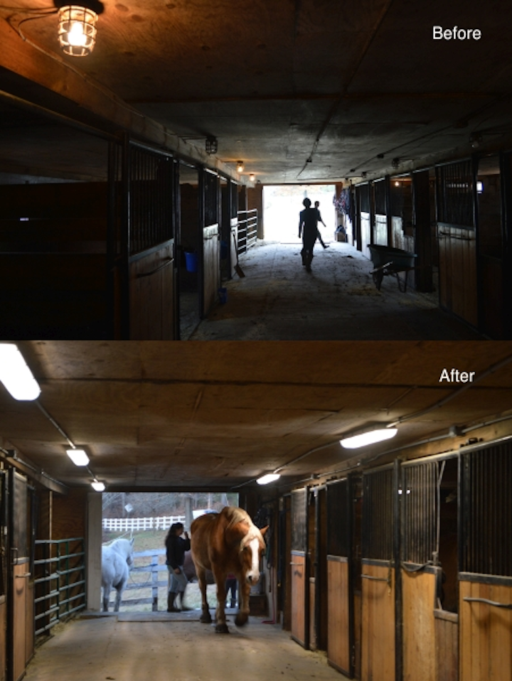 MaxLite and National Grid discover LED lighting reliability advantages in 'equiculture'