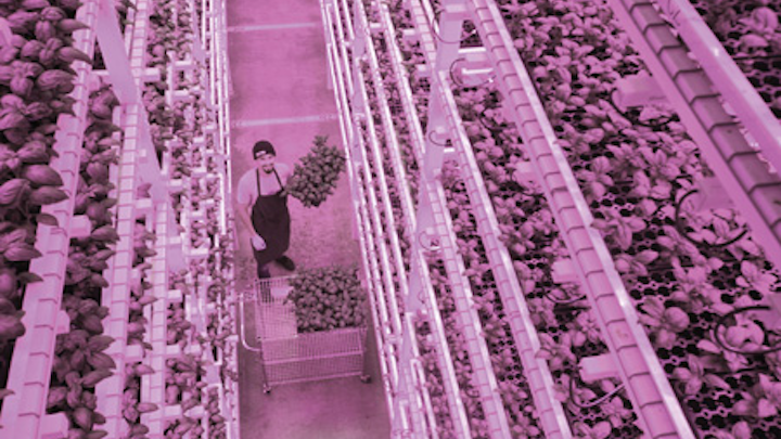 Science advances in matching LED lighting to horticultural needs (MAGAZINE)