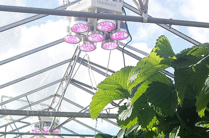 Plessey presents at LEDs Magazine's Horticultural Lighting Conference in Chicago