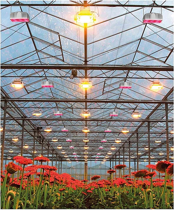 Plessey LEDs support vegetable and flower horticultural lighting applications