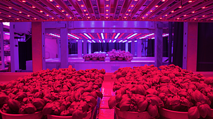 LED horticultural lighting is set to change growing operations by increasing yields