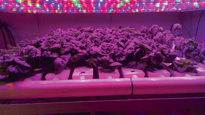 Buyers benefit from LED horticultural lighting guidance