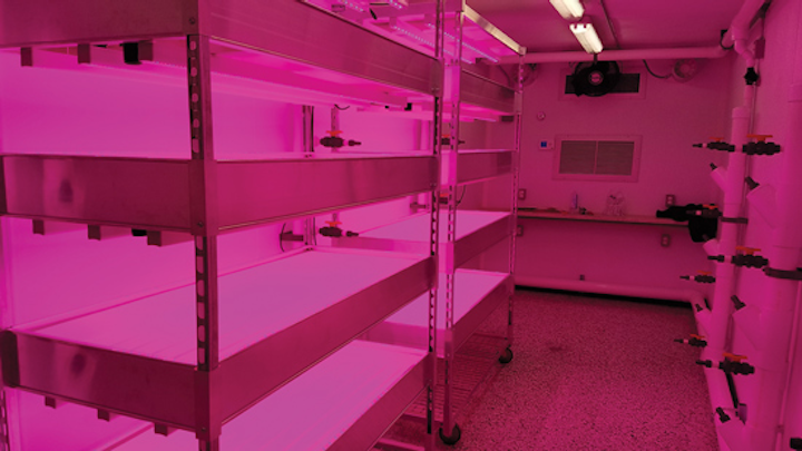 Grocer uses LED horticultural lighting for store-grown produce