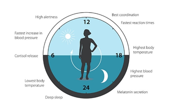 Circadian scientists who have studied light's impact win Nobel