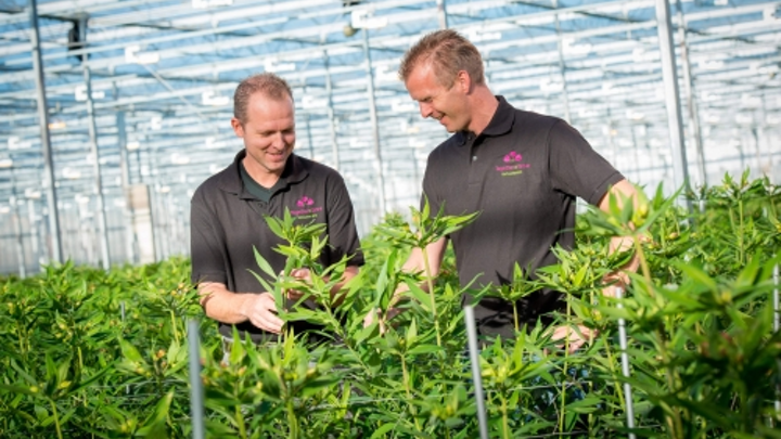 Together2Grow operators have noted a 20% increase in lily yields under supplemental LED horticultural lighting