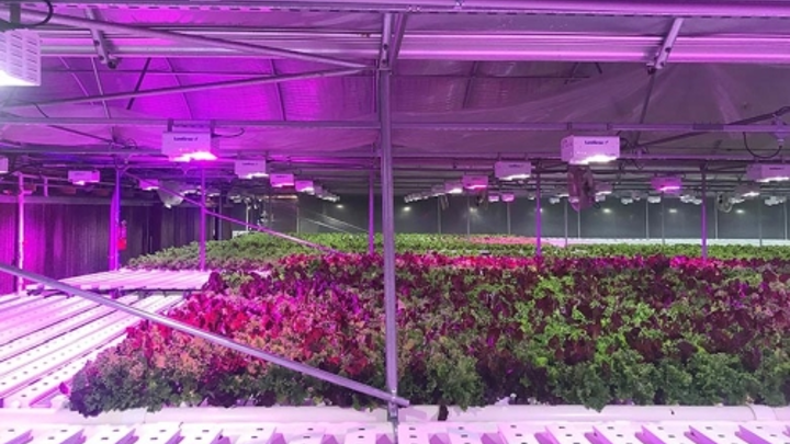 LumiGrow supplies LED horticultural lighting fixtures to Lettuce Work foundation greenhouses