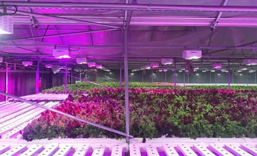 Lumigrow Supplies Led Fixtures To Lettuce Work Foundation