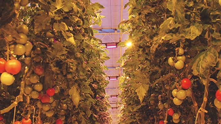 Osram invests in startup using AI for IoT lighting scheme in horticultural operations
