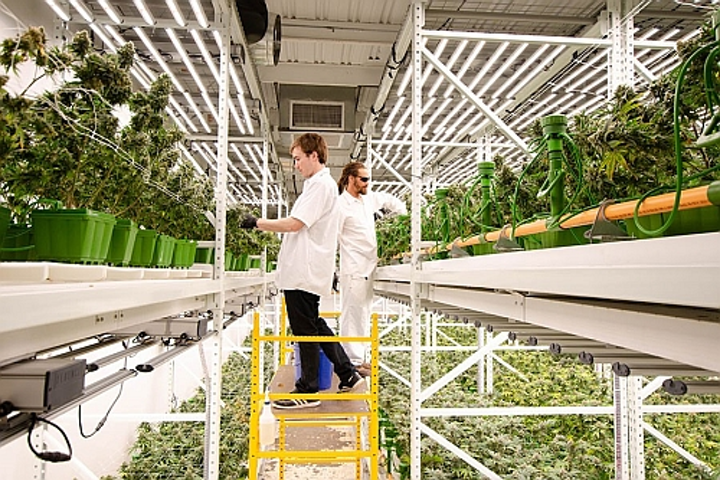 Fluence publishes cannabis horticultural lighting research, names new COO