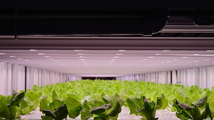 Light recipe delivers clean and fast produce to 7-Eleven stores in Japan