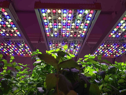 Osram commercializes a horticultural LED luminaire for researchers