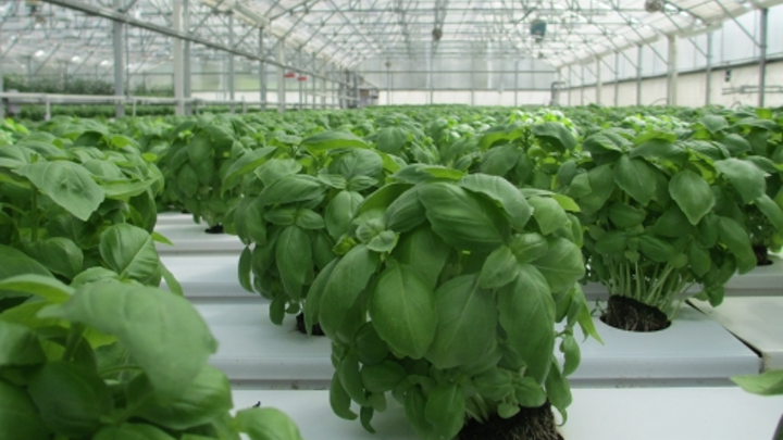 Lighting Research Center adding graduate program in tunable lighting for crops and plants
