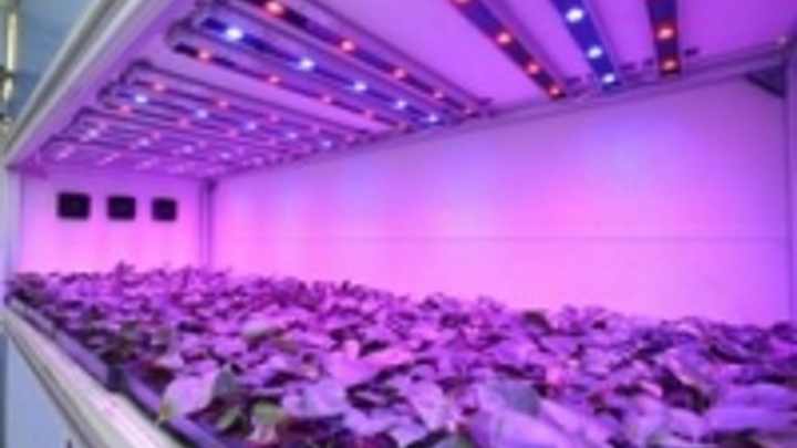 Content Dam Leds En Ugc 2009 06 Philips Sows Seeds For Energy Efficient Horticulture Through Led Lighting Partnership With Bvb Subst Leftcolumn Article Thumbnailimage File