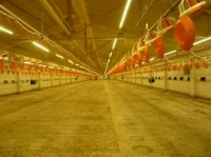 Content Dam Leds En Ugc 2011 09 Russian Poultry Farmers Start To Use Led Lighting System Leftcolumn Article Thumbnailimage File