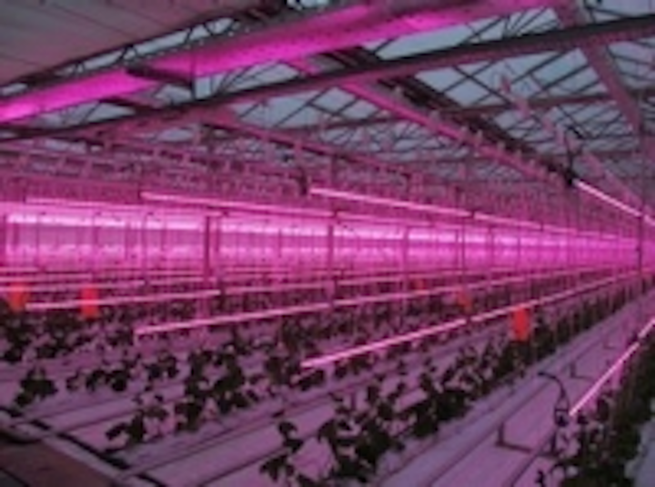 Content Dam Leds En Ugc 2012 12 Prolite Group Starts Commerical Greenhouse Led Lighting Project Leftcolumn Article Thumbnailimage File