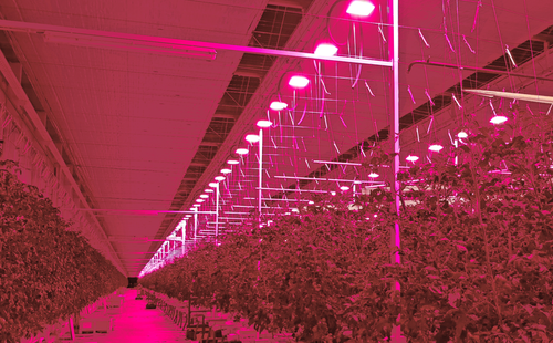 Do Led Grow Lights Provide Enough Heat In A Greenhouse