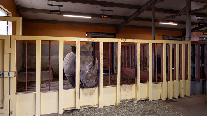 C0307led Rhino Enclosure Goodlight Led Lighting Installed Into Noah's Ark Zoo 7