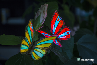 OLEDs lend themselves more than LEDs to fanciful design possibilities, such as these butterflies created by Fraunhofer. (Photo credit: Image courtesy of Fraunhofer FEP.)