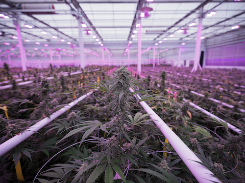 Technology Enabled Horticulture Grabs Investors And Yields