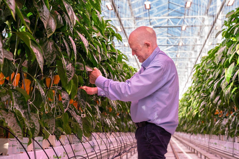 Core Week, administrerende direktør i MiljaCardNorriat, dyrker paprika og tomater under LED-topplys.